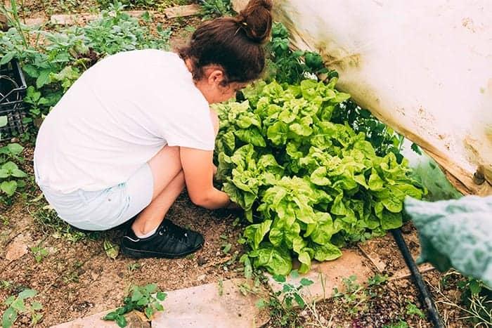 cultivo de plantas medicinales en casa